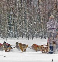 Koiravaljakkoajelua Ellivuoressa