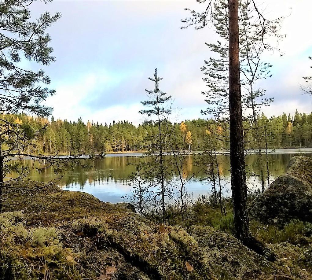 Opastettu kävelykierros Ritajärven lyuonnonsuojelualueella
